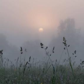 Morning fog by Владимир Агруц - Landscapes Sunsets & Sunrises ( fog, sunrise, landscape, morning )