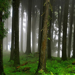 The Mystic Peace by Sayan Bhattacharya - Landscapes Travel ( forests, nature, travel )
