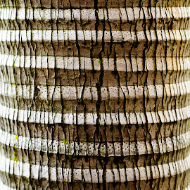 Artistic Tree Bark by Steven De Siow - Nature Up Close Other Natural Objects