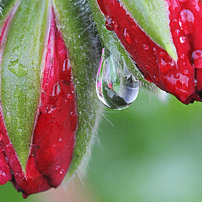 by Cheryl Hudnall Kincaid - Nature Up Close Natural Waterdrops (  )