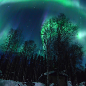 Turn On The Night Light by Rebecca Weatherford - City,  Street & Park  Night ( alaska, northern lights, aurora, aurora borealis )