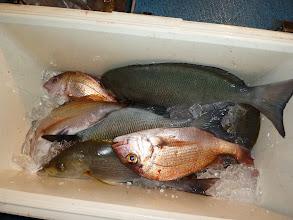 Photo: こっちはオナガ、クロ、イサキ、マダイ。 いつもの釣果よりさみしかったですが2ケタは確保できました。