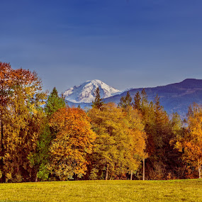 Autumn in the Pacific Northwest by Judy Wright Lott - Landscapes Prairies, Meadows & Fields ( snow-covered mountain top, mountains, lynden, nature, autumn, blue skies, trees, mt. baker, meadows, landscapes )