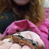 unidentified salamander