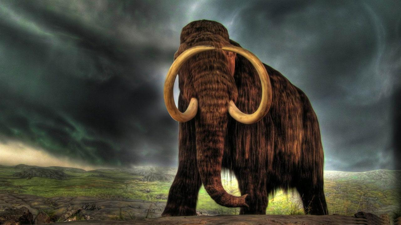 wild animals live wallpaper android apps on google play