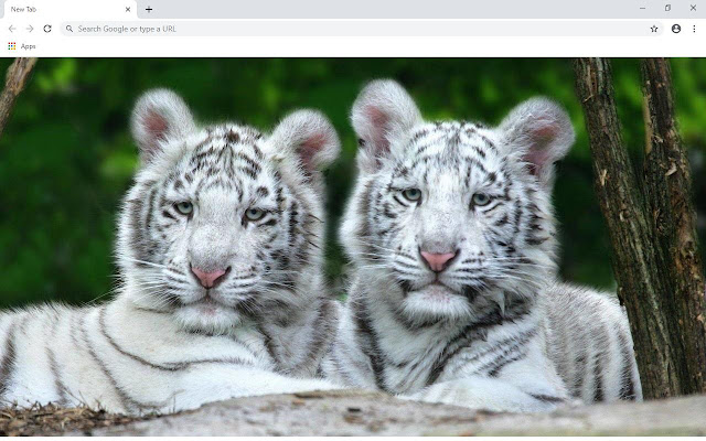 White Tiger Wallpapers and New Tab