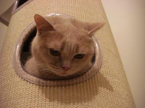 Photo: mir egal, Hauptsache hier ist Ruhe! (Katzenzimmer)