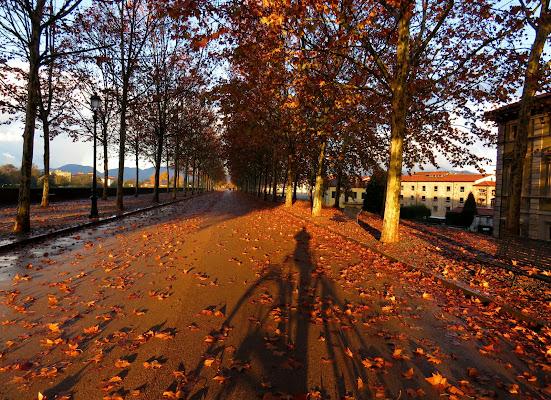 Fotografo in bici,  Lucca, Passeggiata delle Mura  di Giorgio Lucca