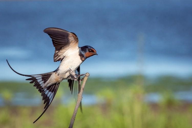 Bird Photos with Laser Trigger