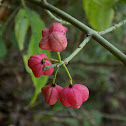 Common spindle