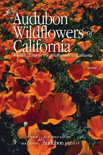 Audubon Wildflowers California