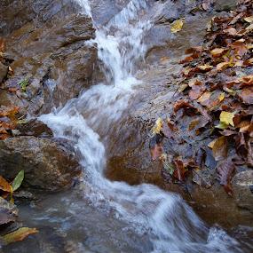 Есен by Georgi Kolev - Nature Up Close Water ( есен., вода., цветове., скали., листа. )