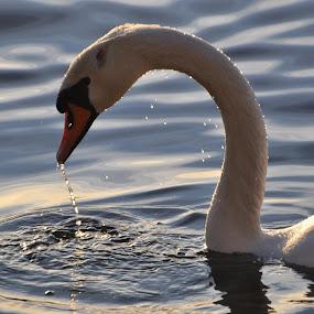 by Rosita Ramner - Animals Birds