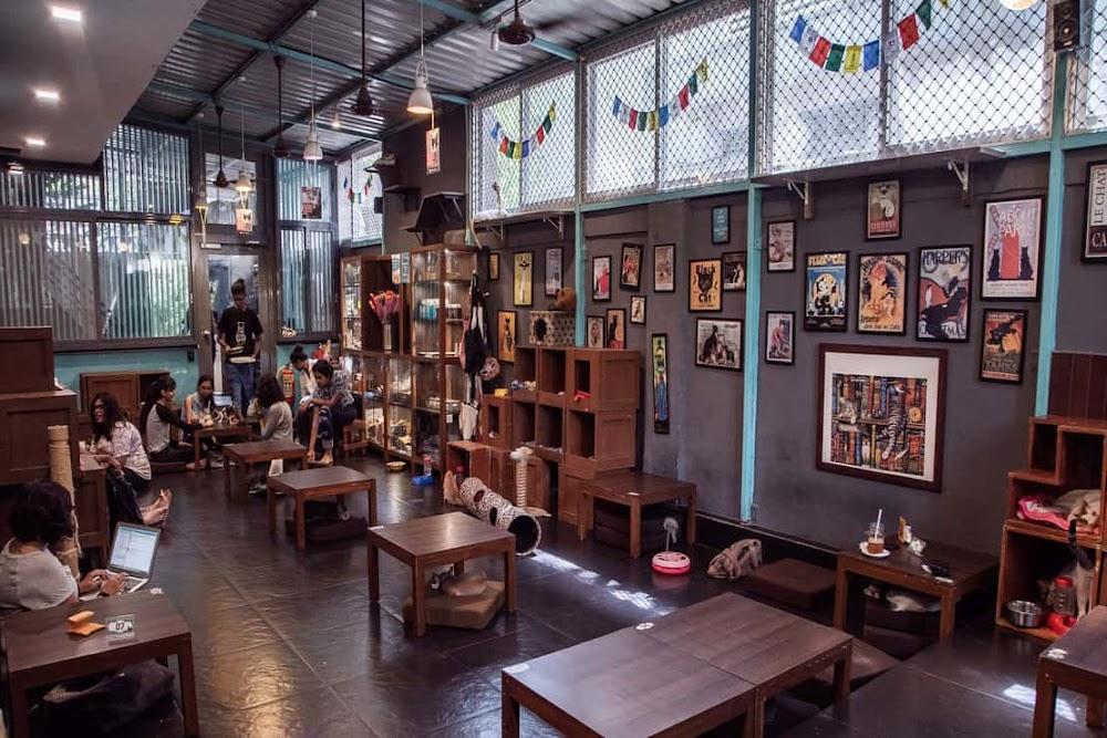 best-pet-friendly-cafes-mumbai-cat-cafe-studio_image
