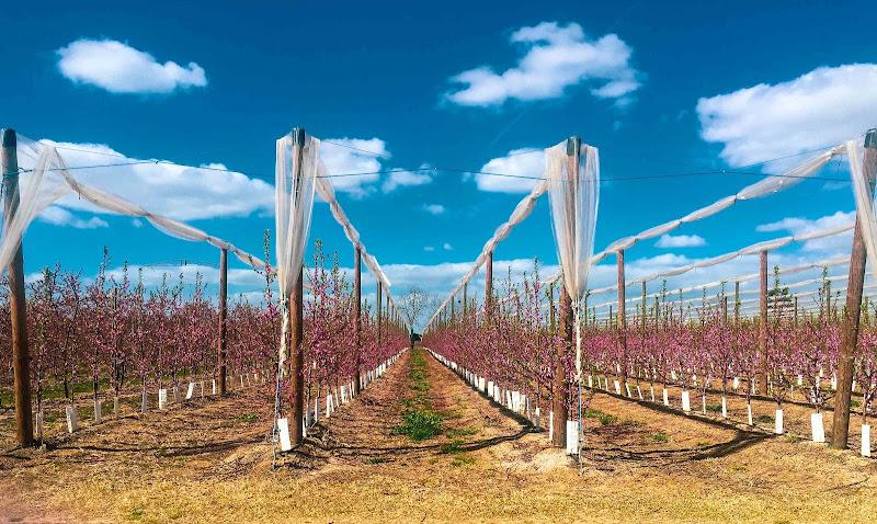 Romagna in fiore di Elegianna