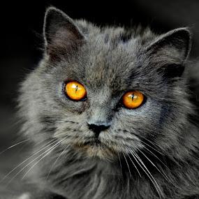 Fishee 2 by Azmi Han - Animals - Cats Portraits