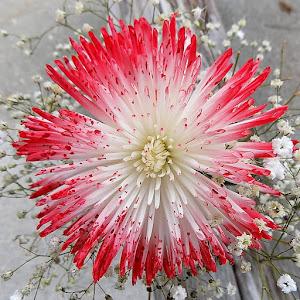 my flowers (5).JPG