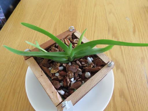 Les orchidées de Grigri G0S_Xk2358lgnBQXBXiS5SNq39w5t1GsQEL-K6KugqqLP_Z5w4wlL6H-knaaZ-Weg0xqxWJyLz-7nflTTOt3dVSy07EJGfdF87Kkjxvp_N3ILE6vsBGyHLBGDXQHF9zJCmv2AyU