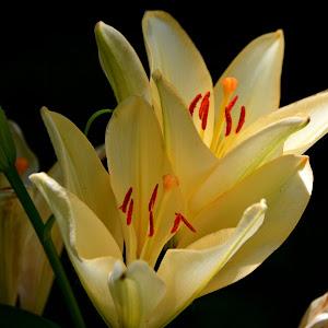6-7-15 flower jfnc 17aa.jpg