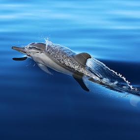 by Arkan Faeyza - Animals Sea Creatures