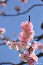 Photo: より根本的な対策が求められるだろう。(武蔵野、2014,03,23)