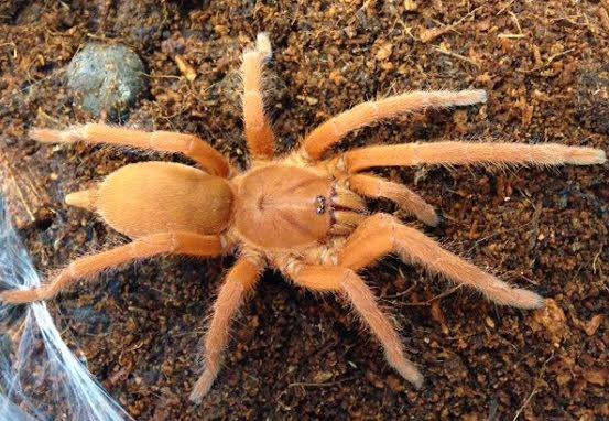 Nya spindlar