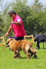 Photo: Puppy Mâle : Yuri Zhivago De Penlas Y Espadas
