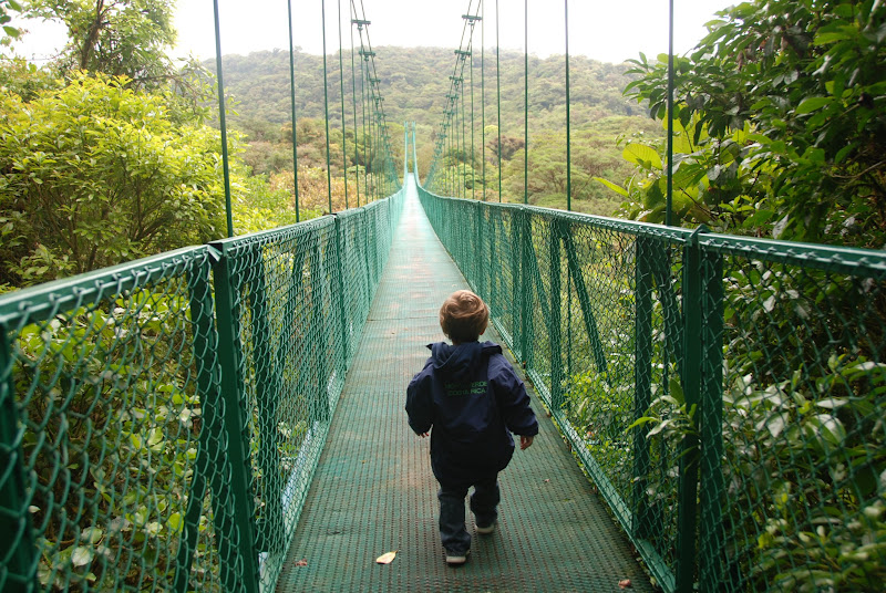 Photo: What's on the other side of the bridge at Selvatura