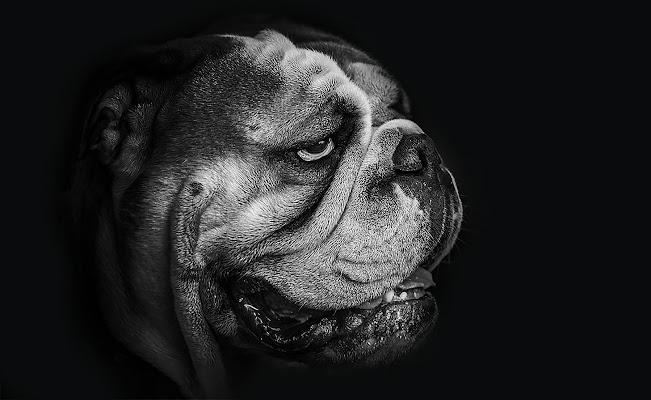 Lord Dog di angart71