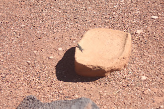 Photo: gecko on a grinding stone