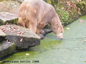 Photo: Knut inspiziert seinen Wassergraben ;-)