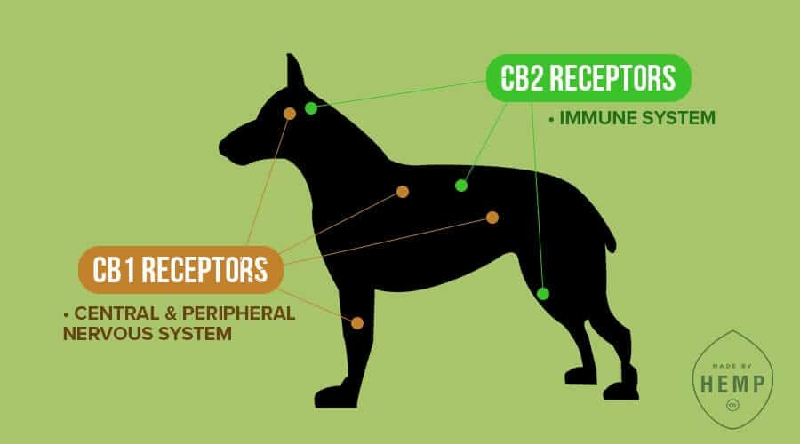 cannabinoid receptors for dogs