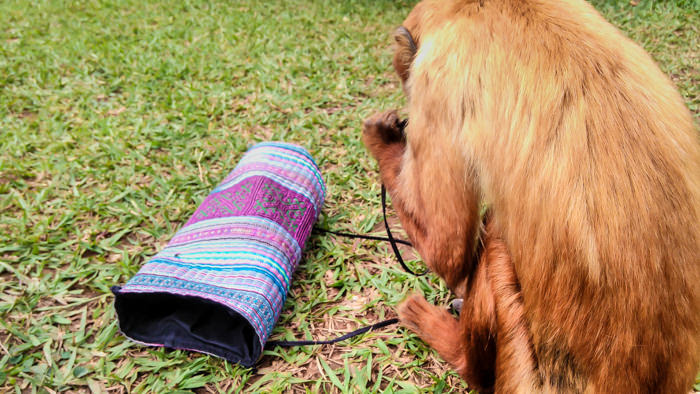 a moneky playing with my sling bag in an animal rescue centre near samaipata in bolivia