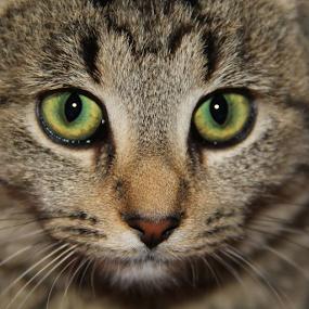 by Marsha Biller - Animals - Cats Kittens (  )