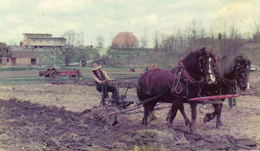 Photo: Ken ploughing with Jack's team - Photo from Angie