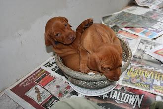Photo: Blå & Rosa sitter både i vågskålen.