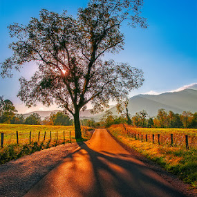 The Tree Cades Cove by Charles Hardin - Nature Up Close Trees & Bushes ( mountains, tree, charles k. hardin photography, sunrise, cades cove )
