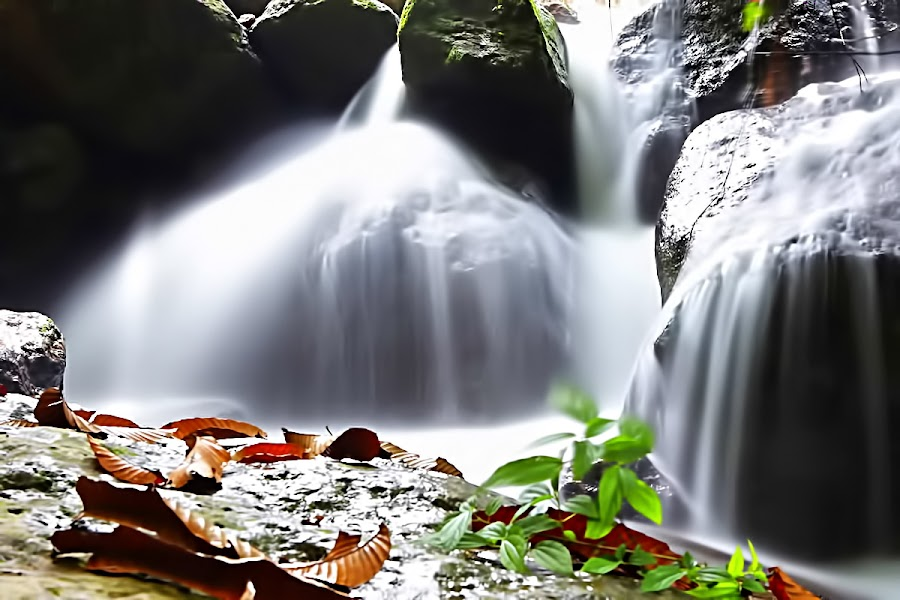 AT THE RIVER by Fammz Fammudin - Nature Up Close Water ( water, nature )