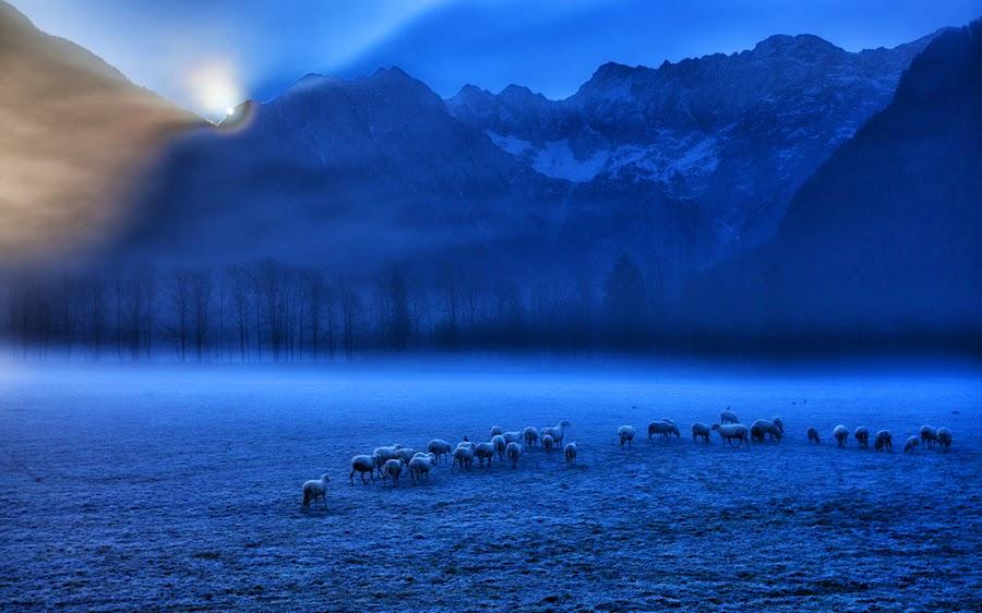 Waiting for  Sun by Rok Godec - Landscapes Prairies, Meadows & Fields ( alps. slovenia, mountain, meadow, sheep, jezersko )