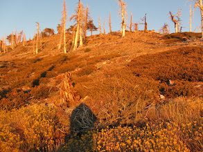 Photo: Approaching the west ridge of Mount Hawkins off trail