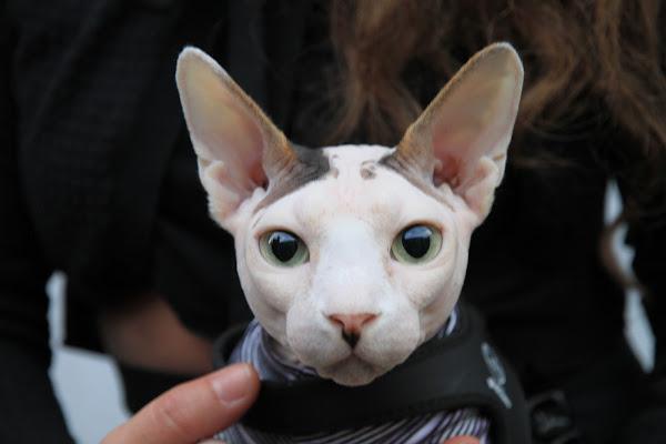 sono un gatto  di G.Papagno