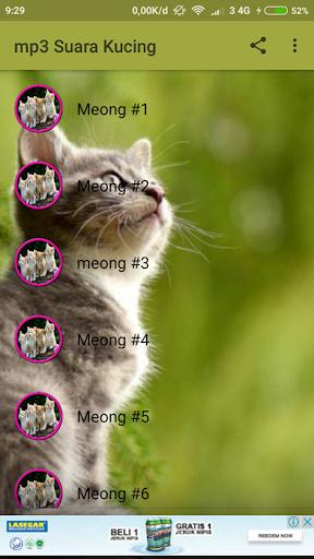 Download Suara Kucing : download, suara, kucing, Download, Suara, Kucing, Google, AQ0QSnNm1Gen, Mobile9
