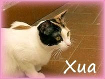 Photo: Xua