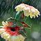 PixD71_5051.jpg