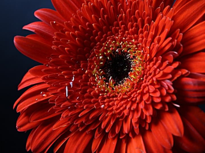 Bellezza in rosso di Paulette