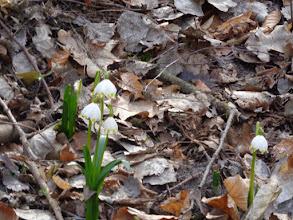 Photo: Kwiatki były malutkie, ale były i mogliśmy nimi nacieszyć nasze oczy.