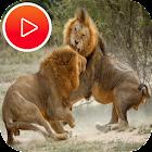 عالم الحيوانات المفترسة - ناشونال جيوجرافيك icon