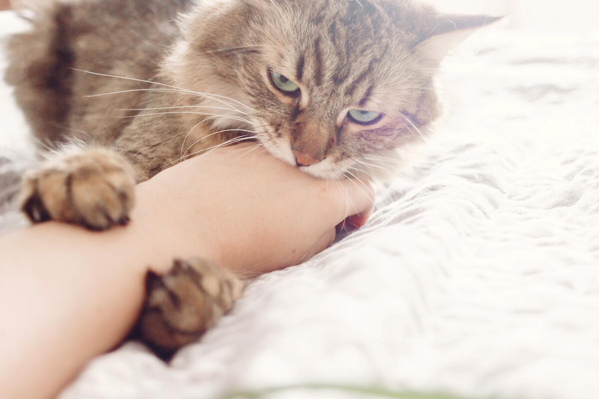 apprenez à reconnaître le langage des chats