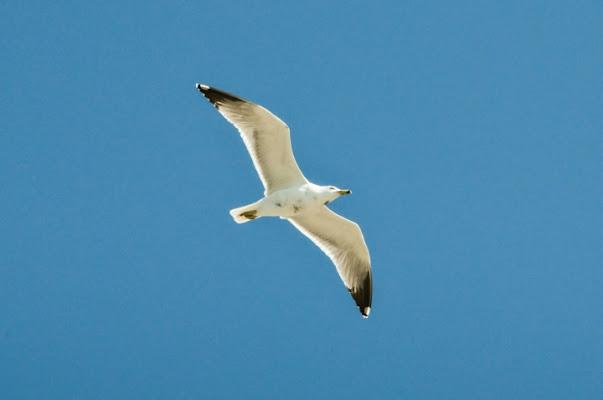 Libertà... è un paio d'ali di lalla68