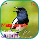 Download Masteran Kacer Juara OFFLINE For PC Windows and Mac